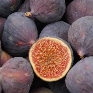 Schmoo Fig & Frangipani